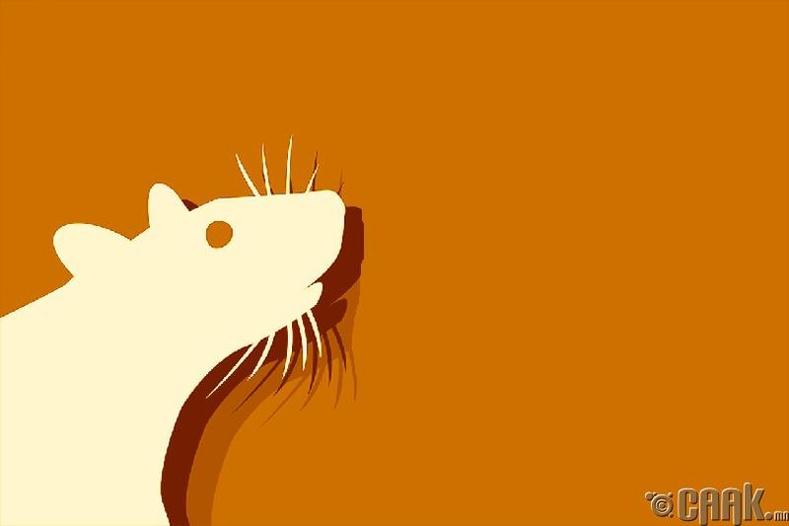 Хулгана жил