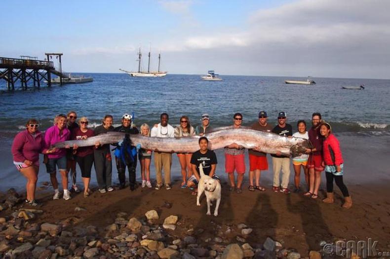 Далайн гүний аварга загас