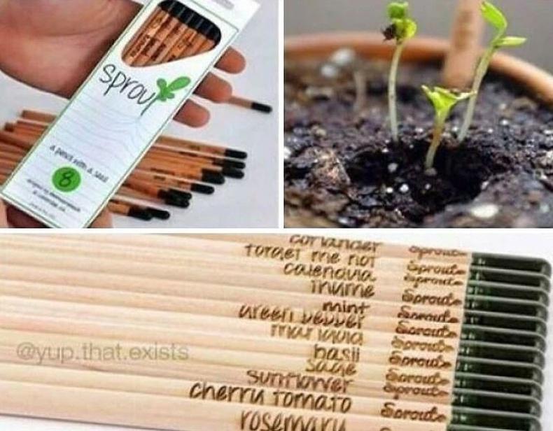 Харандааг хэрэглэж дуусгаад хөрсөнд суулгахад тасалгааны ургамал ургана гэнэ.