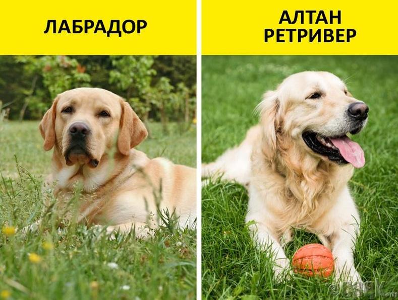 Нохойны үүлдэр