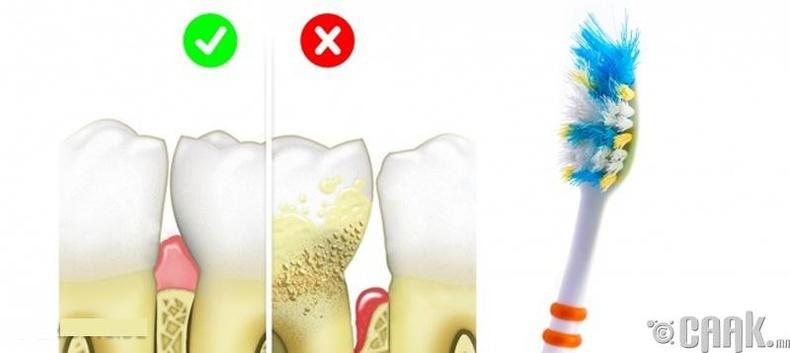 Шүдний сойзоо удаан хэрэглэх