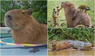 Дэлхийн хамгийн нөхөрсөг, хамгийн амгалан амьтантай танилц!