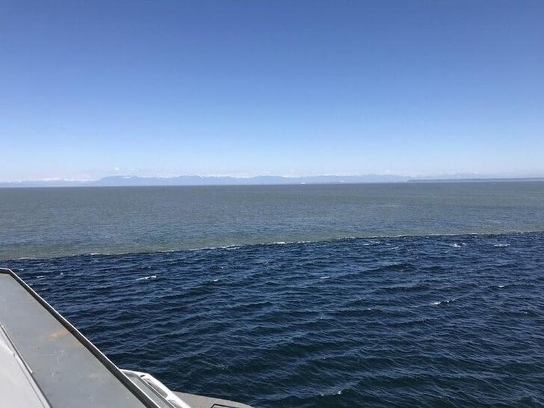 Далайн хоёр урсгалын зааг