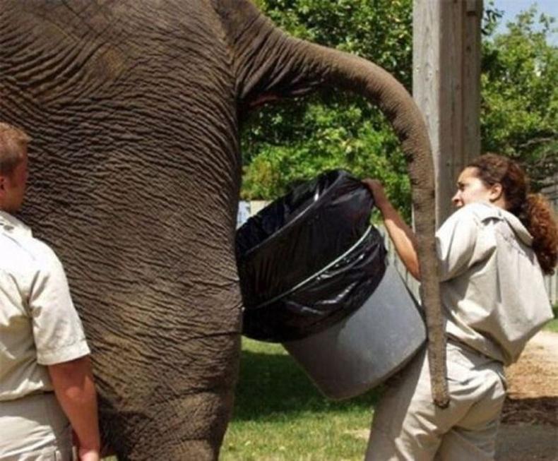 Зоопаркийн ажилтнууд аа гэж!