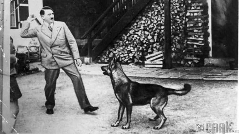 Адольф Гитлер нохойнд хайртай байсан