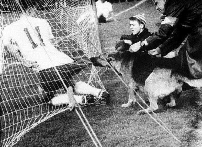 Германы Кёлн хотод болсон тэмцээний үеэр цагдаагийн нохой тамирчин руу дайрсан нь, 1959 он.