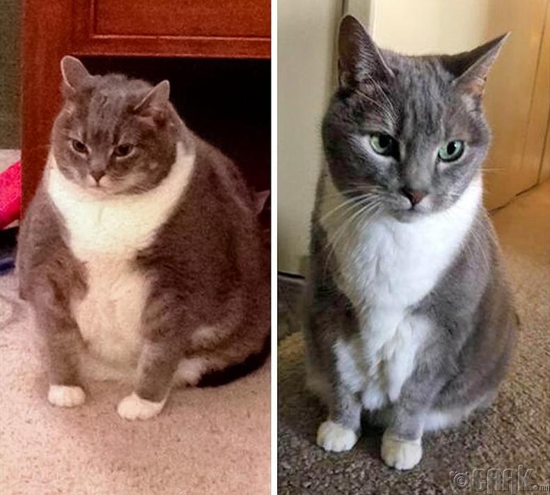 Амьтад ч мөн ялгаагүй хүсвэл жингээ хасаж чадна. Жишээ нь энэ муур 6 сарын дотор 10.4-өөс 5.9 кг жинтэй болтлоо туржээ
