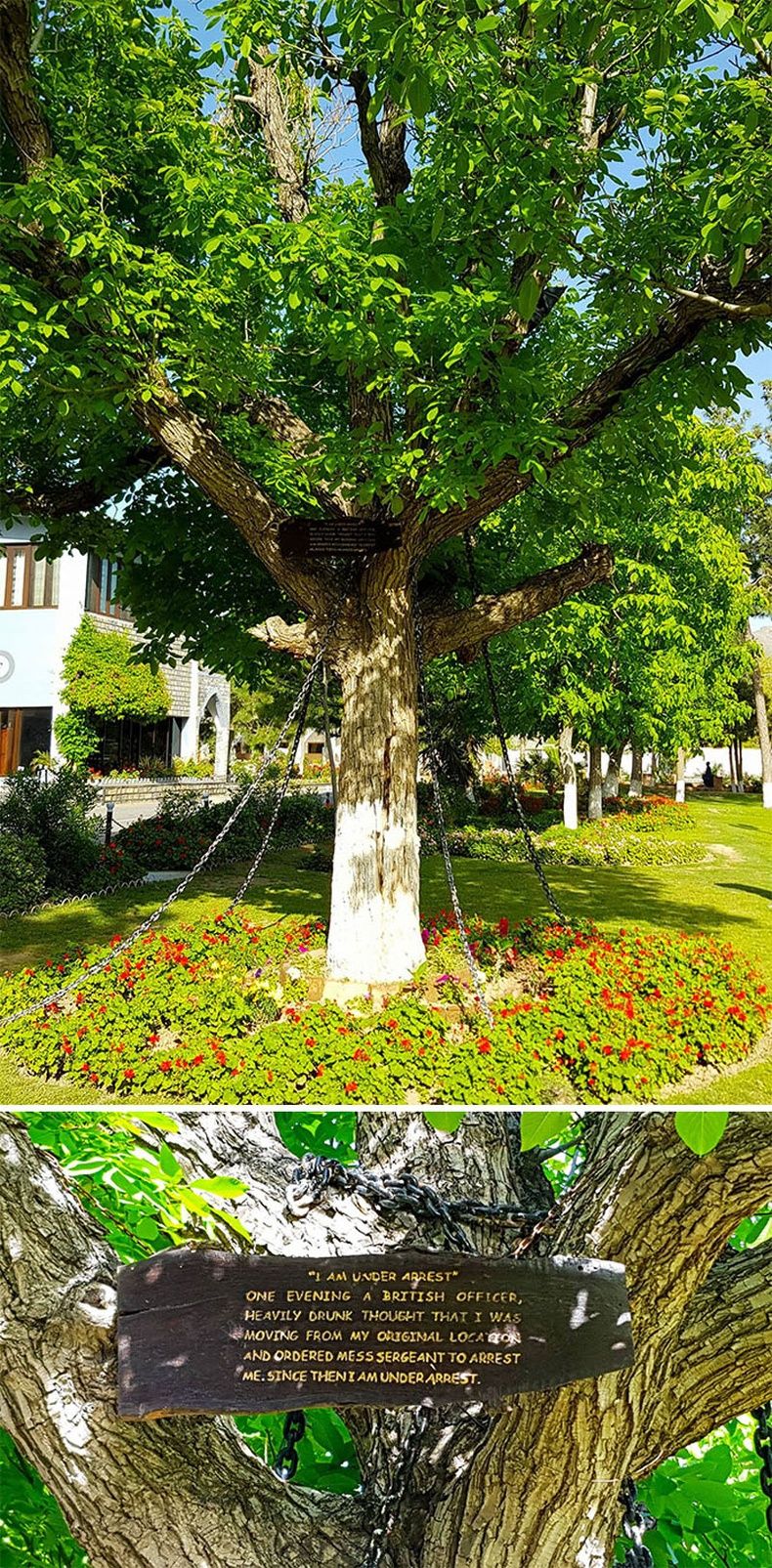 Баривчлагдсан мод