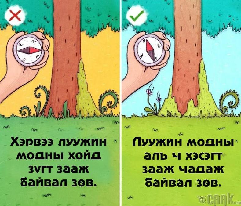 Модны хөвдөөр зүгээ баримжаалах: