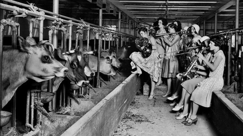 Үнээний сүүний гарцыг сайжруулахын тулд тэдэнд хөгжим тоглож өгч буй охид - АНУ, 1930-аад он