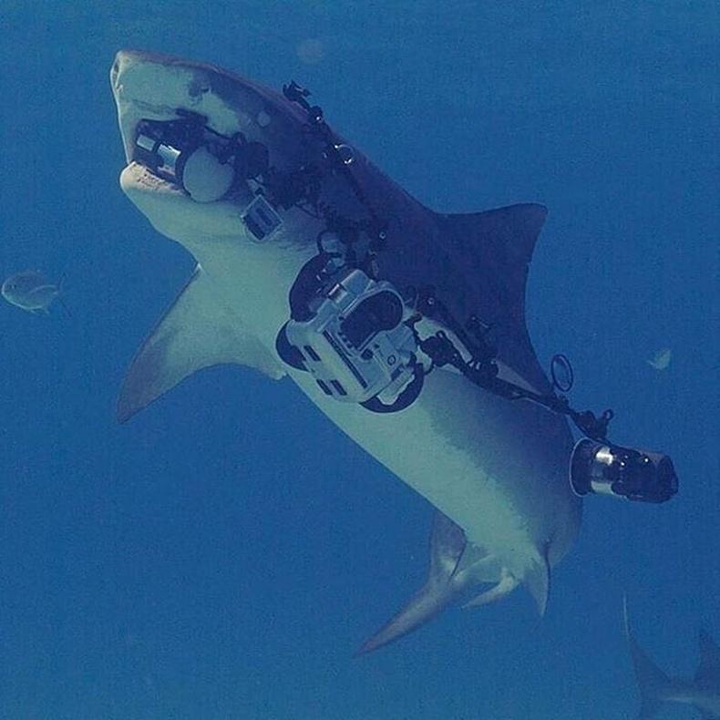 Аварга загас нэгэн залуугийн бичлэг хийж байсан камерыг аваад сэлээд явчихсан гэнэ.