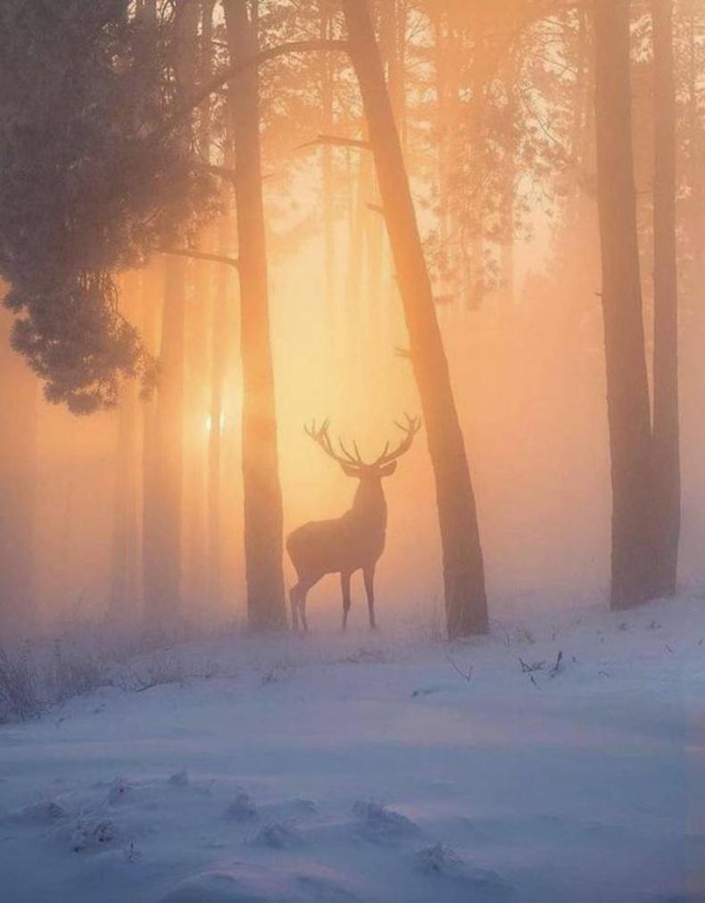 Өвлийн ойд