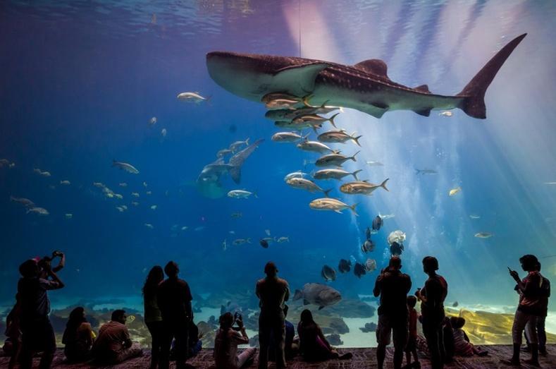 Дэлхийн хамгийн өвөрмөц аквариумууд