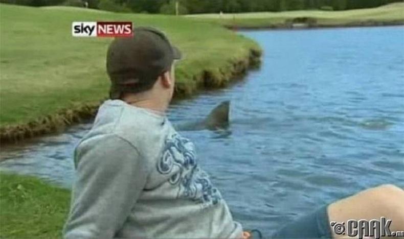 Өөр ямар амьтан гольфид дуртайг та мэдэх үү?