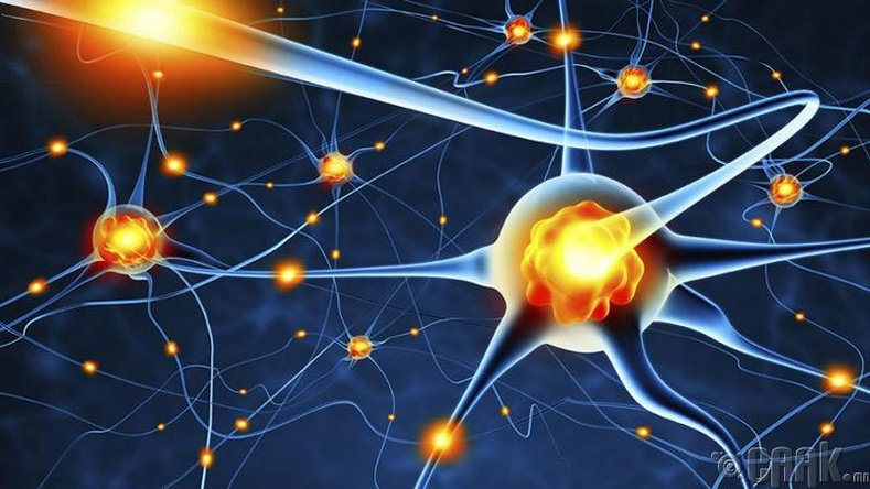 Мэдрэлийн эсүүд