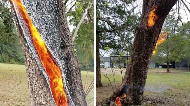 Ойн түймрийн үеэр дотор талаасаа шатаж буй мод