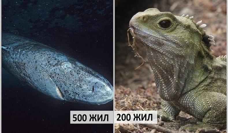 """""""Мөнхийн ус уусан амьтад"""" - Дэлхий дээр юу хамгийн удаан амьдардаг вэ?"""