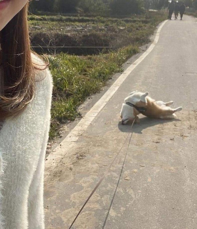 Нохой алдаа зааж байна...
