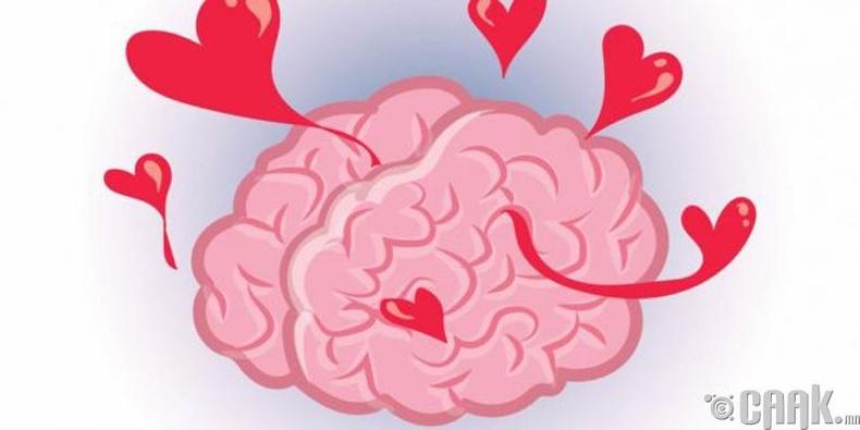 Tомограф зургаас дурласан хүний тархийг ялгаж харж болно