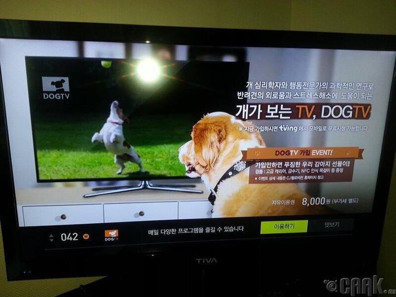 Нохойд зориулсан тусдаа телевизийн суваг байдаг