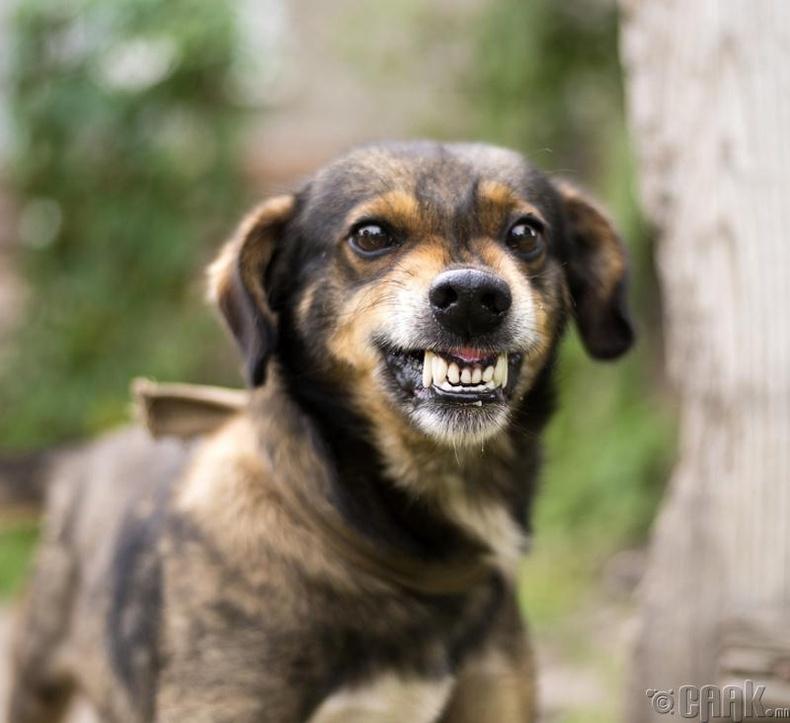 Ууралсан нохой
