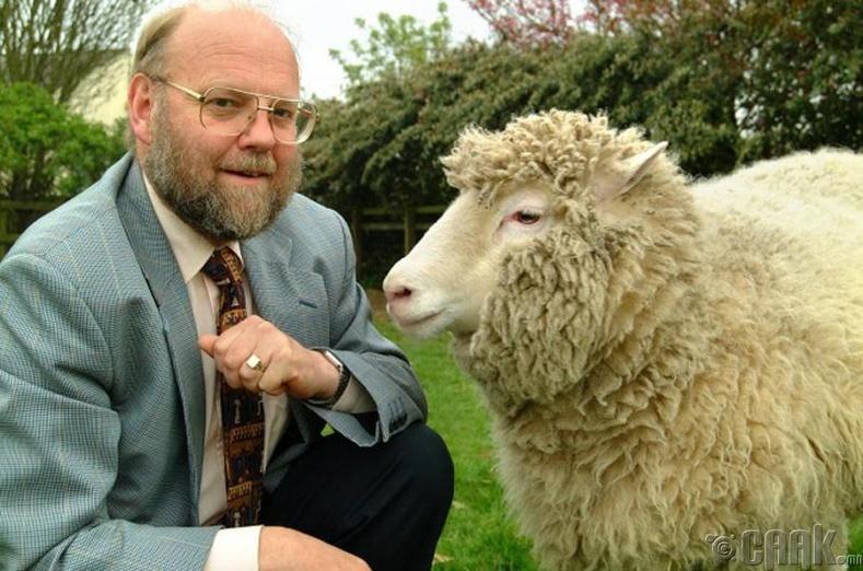 Эсийн үржлийг баталсан хонь
