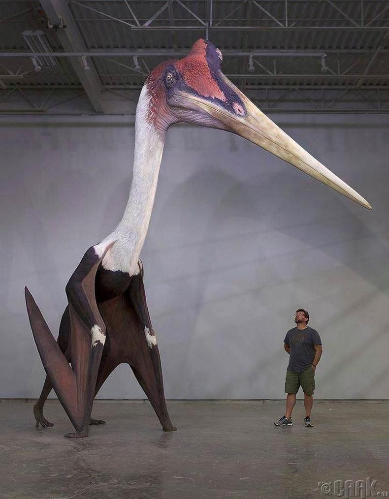 Птерозавр үлэг гүрвэлийн загвар