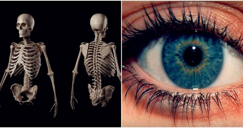 Та өөрийнхөө бие организмын тухай хэр их зүйлийг мэдэх вэ?