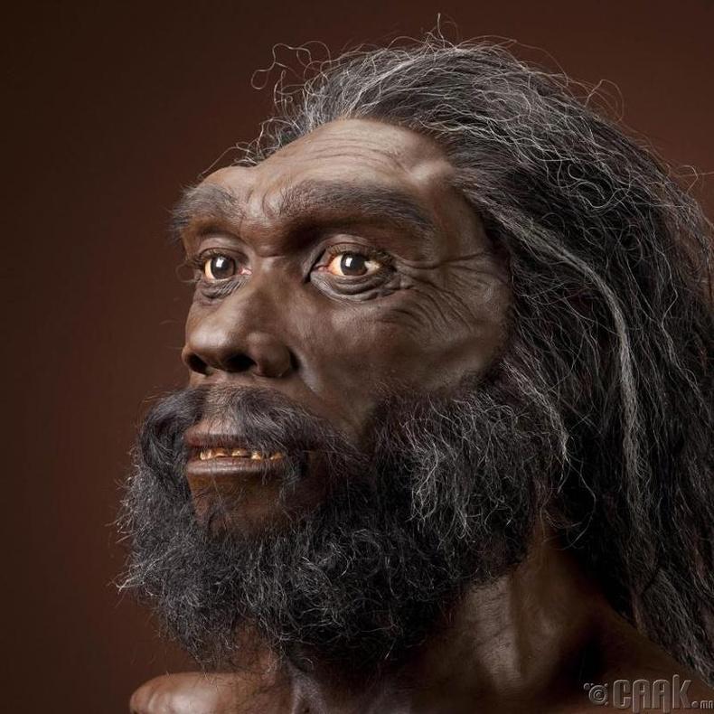 Хомо Хэйделбергэнсис (Homo Heidelbergensis)
