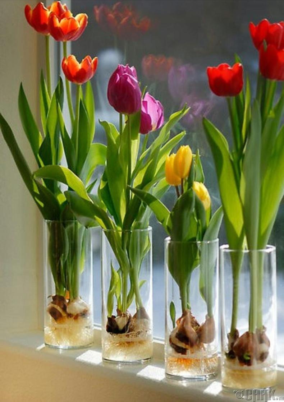 Алтанзул цэцэг