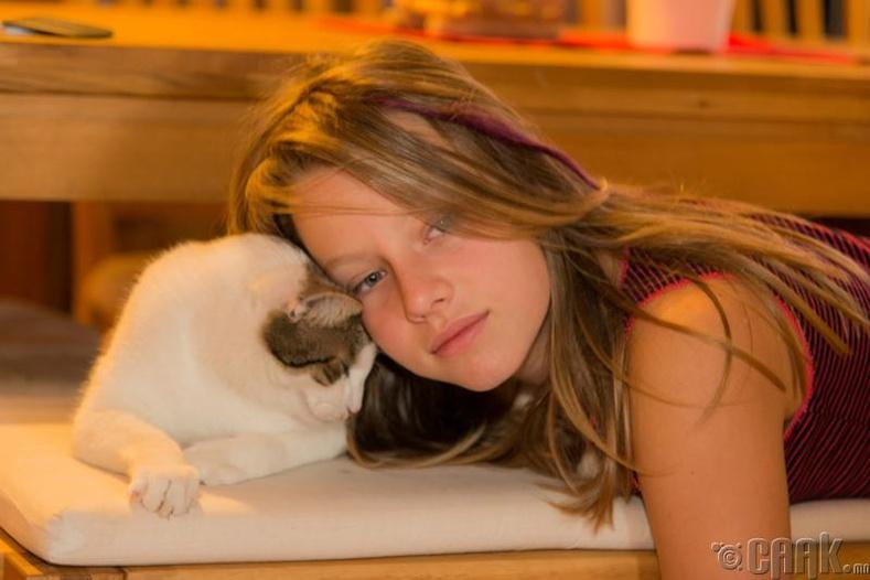 Муур зөвхөн өөрийн итгэдэг, хайртай хүндээ л толгойгоо хүргэдэг