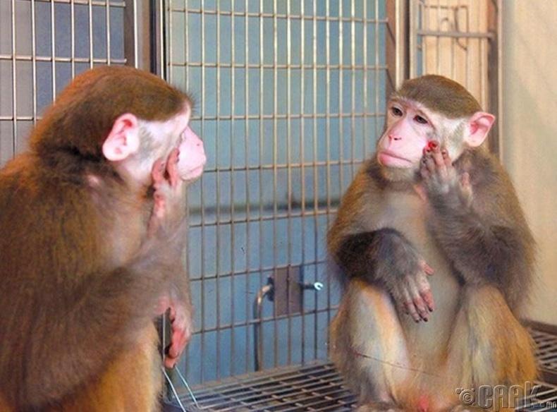 Сармагчин хамгийн түрүүнд цавь хэсгээ толинд хардаг