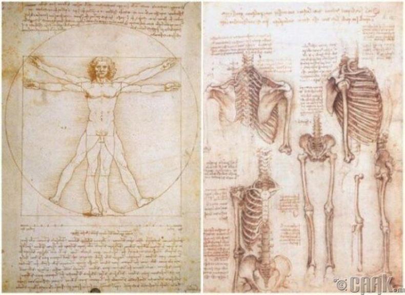 Анатомийн талаарх гар бичмэл