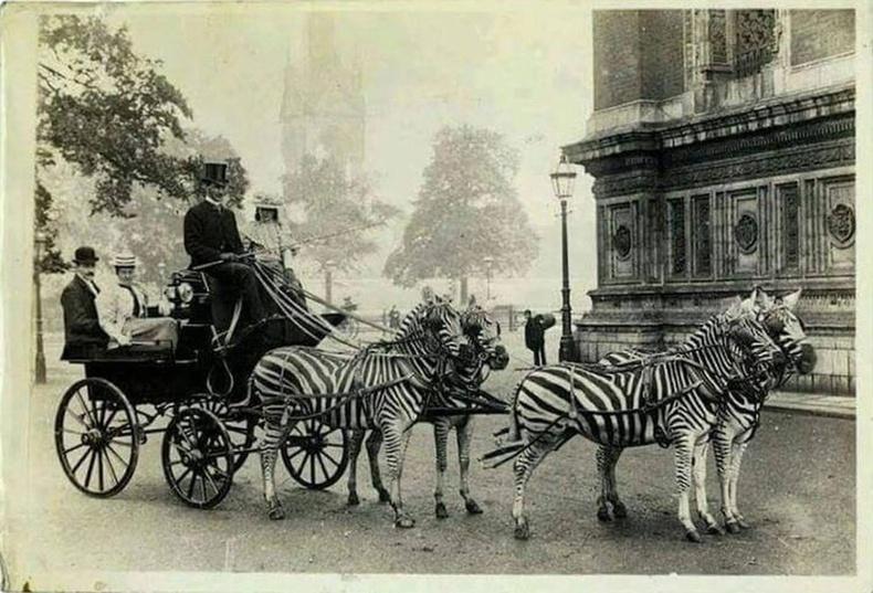 Тэрбумтан Леопольд Де Ротшильд ба түүний алдарт тахь тэрэг, Лондон, 1898