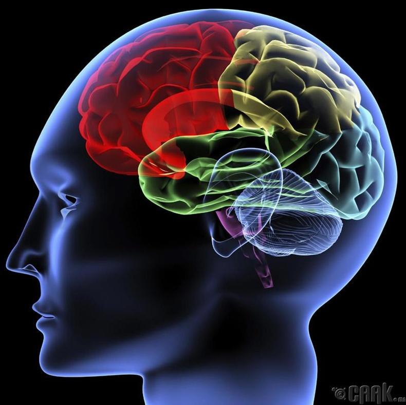 Тархины үйл ажиллагааг дэмжинэ
