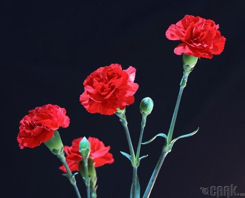 Хар, улаан цэцэг