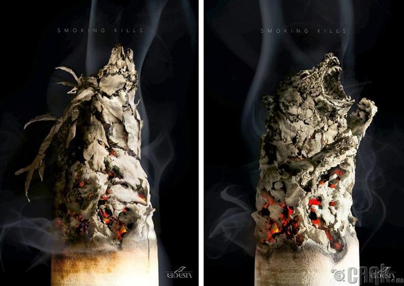 """""""Тамхи татдаг хүн зөвхөн өөрийгөө бус ойн амьтдыг хөнөөж байдаг"""""""