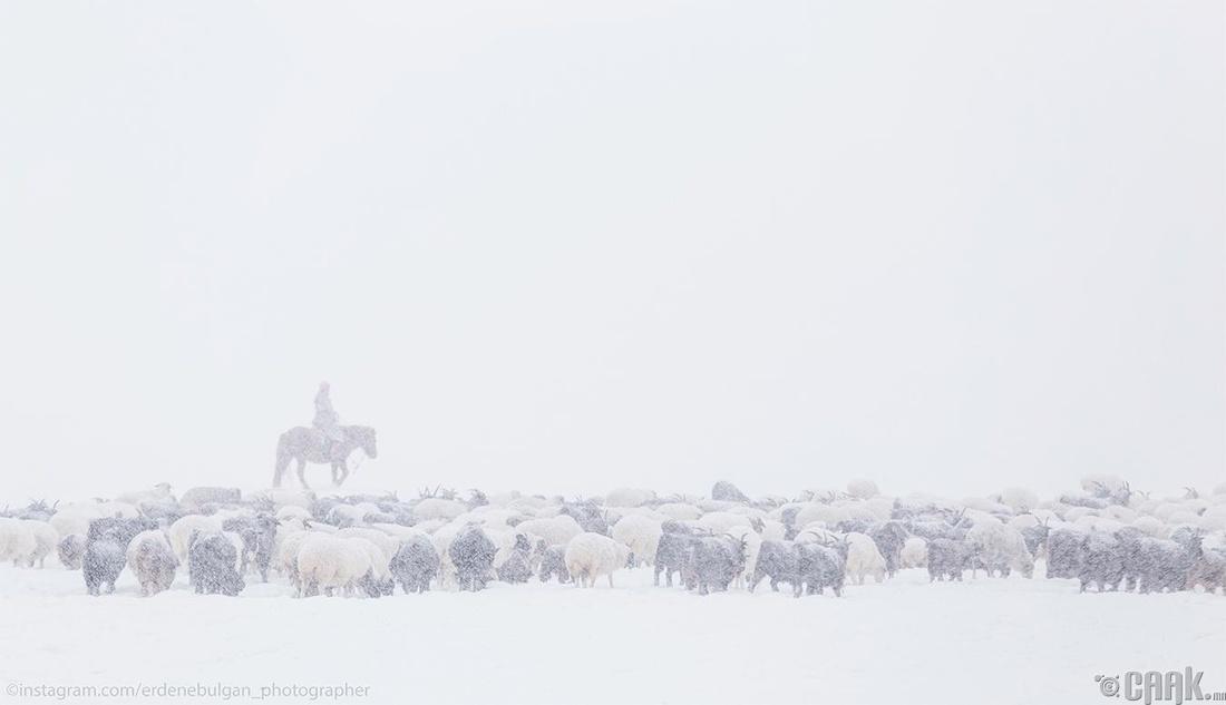 Монголын өвөл