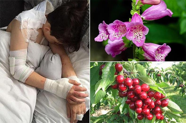 Үхлийн аюултай, хамгийн хортой 10 ургамал