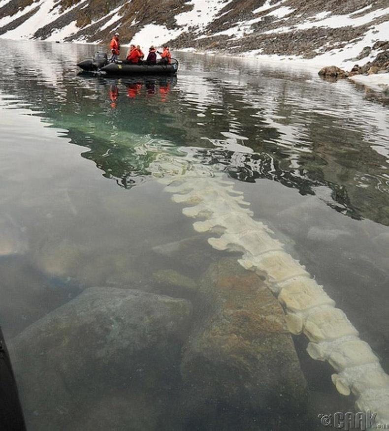 Норвегийн нуураас олдсон халимын нурууны яс
