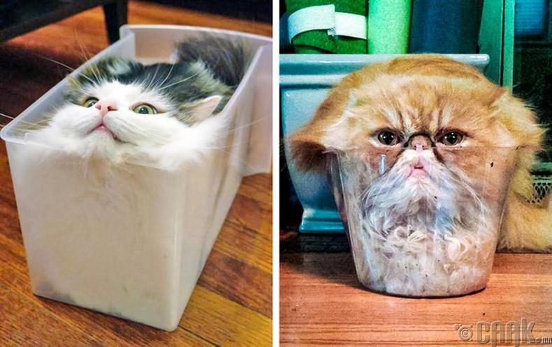 Муур бол шингэн