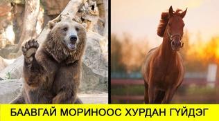 Биднийг алмайруулж чаддаг амьтад