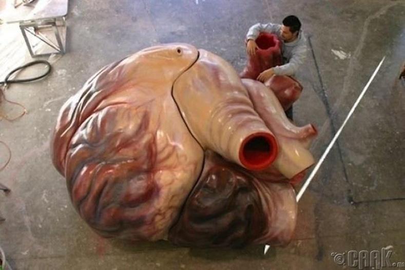 Цэнхэр халимны зүрхний загвар