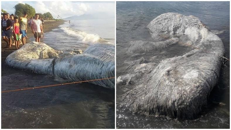 Филиппиний далайн эргээс олдсон учир битүүлэг амьтан
