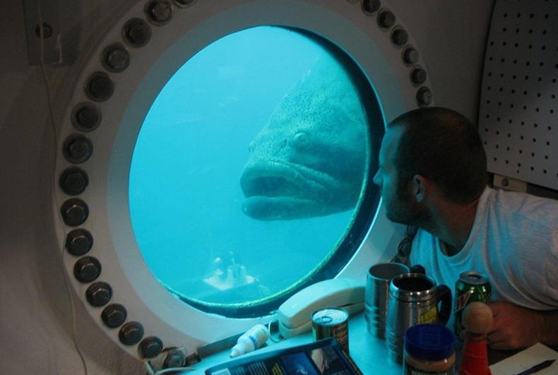Дэлхийн цорын ганц усан доорх лаборатори