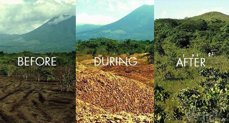 Коста Рикад сүйдсэн ширэнгэн ойг сэргээхийн тулд 16 жилийг зарцуулжээ
