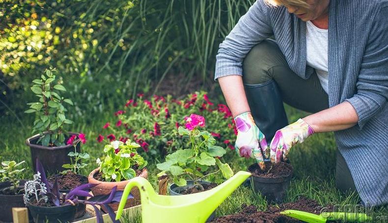 Цэцэрлэг янзлах