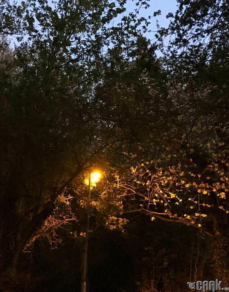 Шөнө, өдөр уулздаг газар