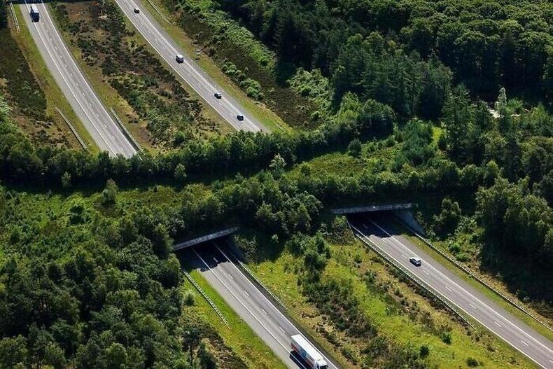 Амьтдын явах газарт саад болохгүй хурдны замын гүүр, Нидерланд