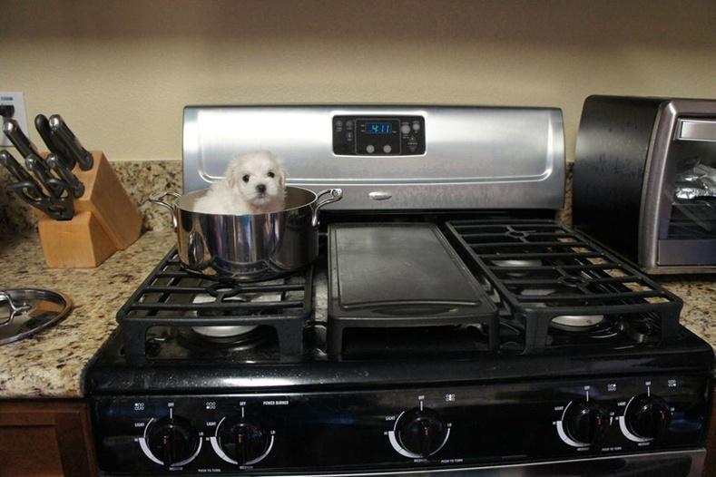 Би дүүдээ нохойгоо үлдээгээд явсан юм. Тэгтэл хойноос ийм зураг явуулж